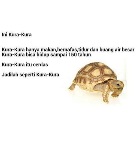 Lu Tidur Kura Kura 25 best memes about language