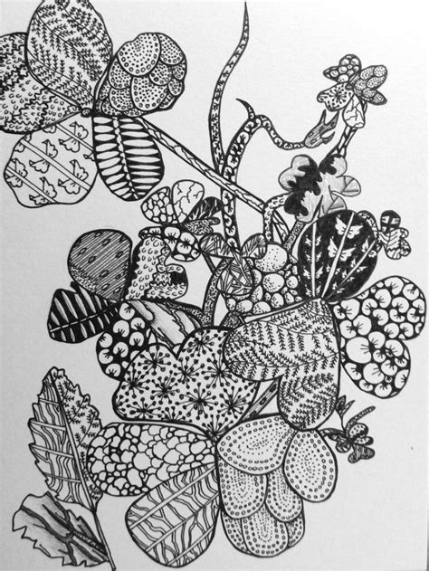 pattern in nature drawing zentangle artful explorations in nature