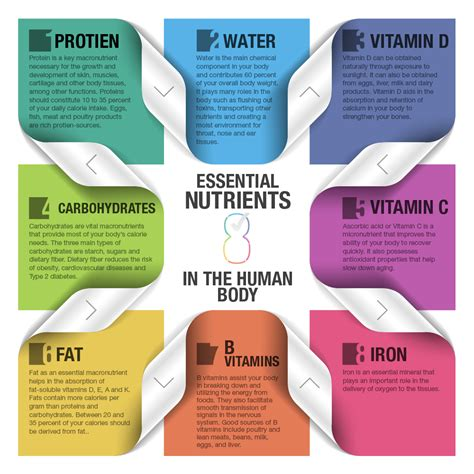 8 Essential Vitamins For by 8 Essential Nutrients Of The Human Food Health