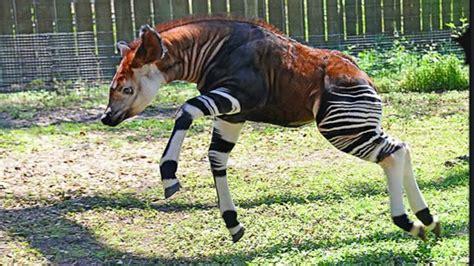 imagenes de animales extraños reales los 10 animales mas raros y curiosos del mundo youtube