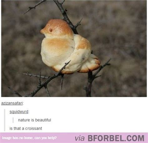 1017 best images about funny things group on pinterest
