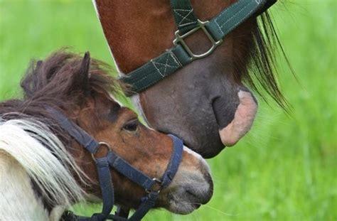 pferd eindecken ab wann gut zu wissen wann ein pferd ein pony ist web wissen