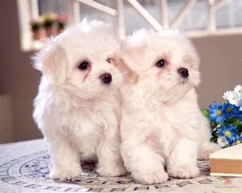 baby baby puppies baby wallpapers wallpaper cave