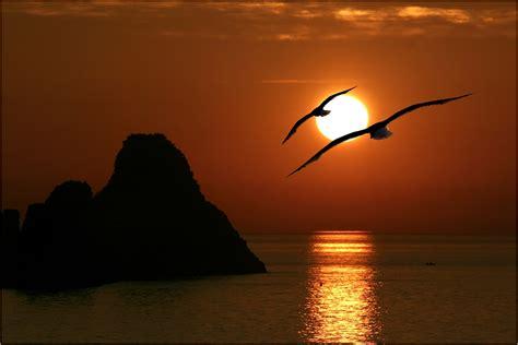 foto di gabbiano gabbiani foto immagini paesaggi mare natura foto su