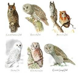 types of owls owls pinterest