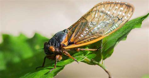 garden flies pest plant pest detective identifying common plant pests