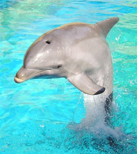 imagenes animales de mar el ba 218 l de las sorpresas animales del mar