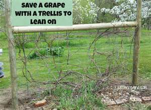 how to build grape trellis support just me