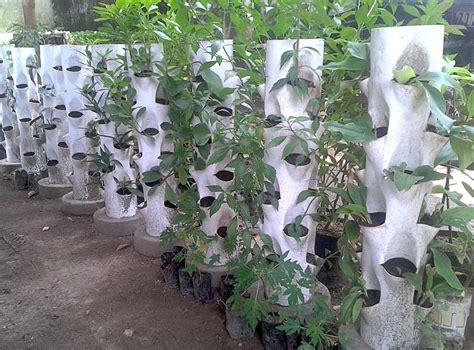 pertanian vertikultur