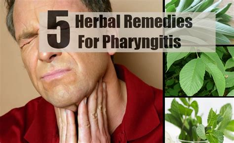 pharyngitis herbal remedies treatments and cure