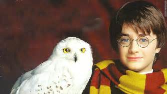 harry potter tour owls distressed peta claims mar 25