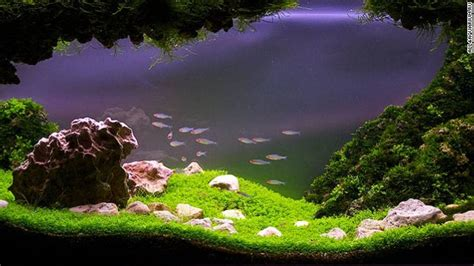 aquascape plants pimp my fish tank this is the eerie beautiful world of aquascaping cnn com