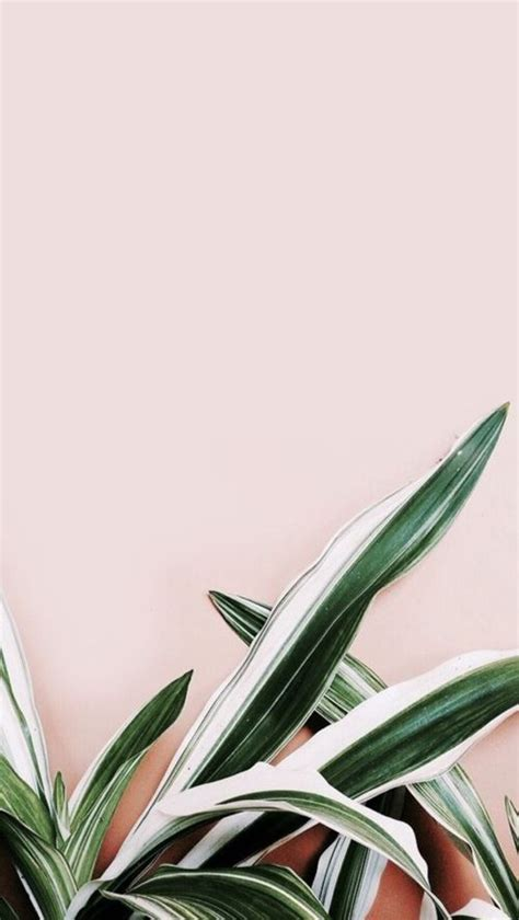 wallpaper for iphone 5 plant tumblr plant wallpaper pinteres