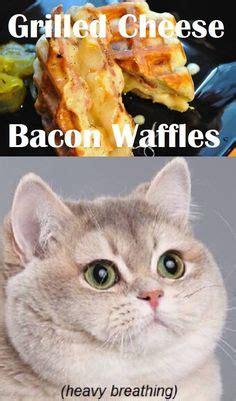 Cat Heavy Breathing Meme - heavy breathing cat meme lulz on pinterest heavy