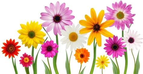 free floral images hd flower pictures free stock photos download 13 444 free