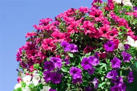 summer flower summer blooming flowers
