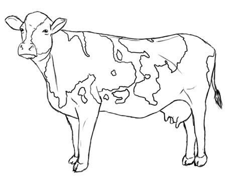 how to a cow how to draw a cow draw central