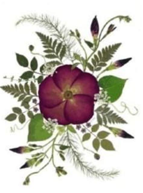 hojas secas de masa de sal manualidades infantiles 17 mejores ideas sobre arte con flores prensadas en