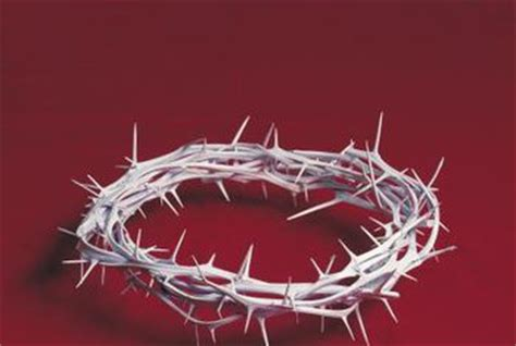 How To Make A Crown Of Thorns Out Of Paper - can i prune crown of thorns home guides sf gate