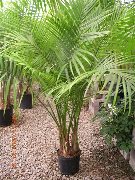 tropical plant species tropical plants