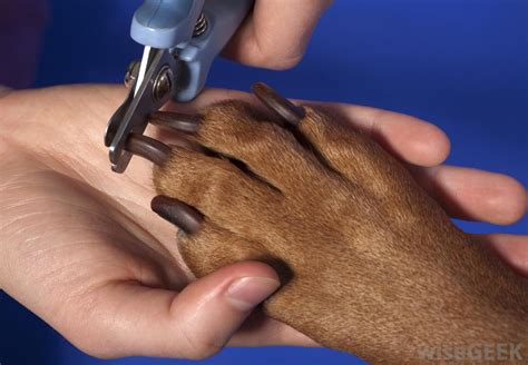 how to trim puppy nails how can i trim my s nails with pictures