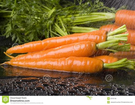 are carrots a root vegetable carrots royalty free stock photo image 2316745