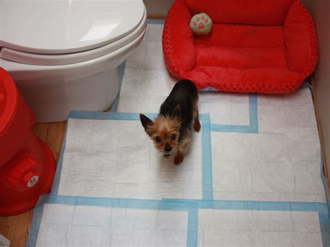 how to puppy pad a puppy puppy pad wizard archives puppy pad wizard