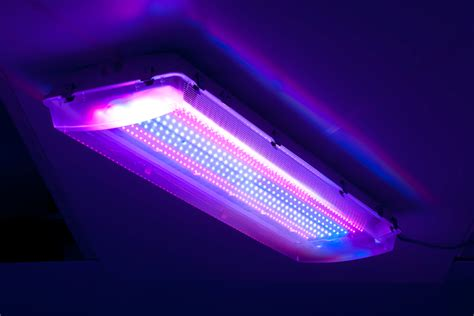 Wham Bam Big Daddy Led Grow Lights Big Lights