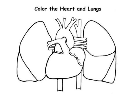 coloring pages of heart and lungs human heart color