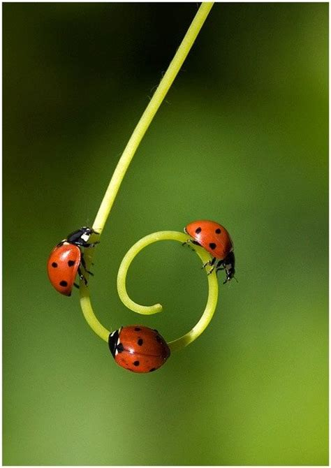 where to find ladybugs in your backyard 48 best vines images on pinterest nature spirals and