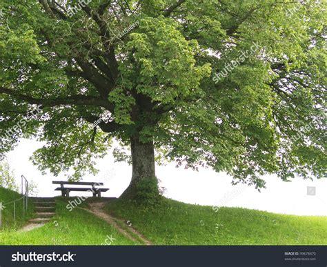 bench under tree bench under tree 6 summer season stock photo 99678470