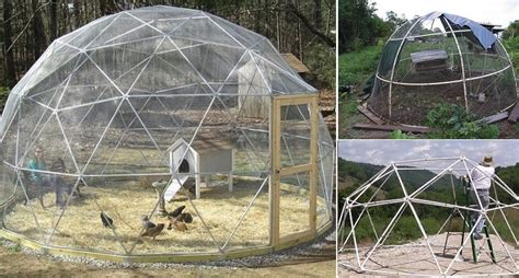 build  geodesic chicken dome home design garden