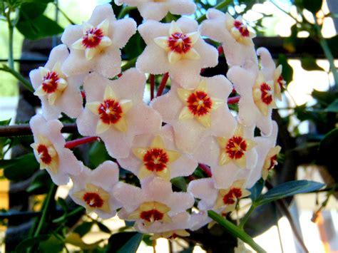 fiori di settembre fiori di settembre vg78 pineglen