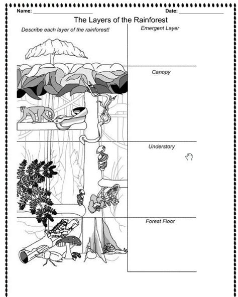 rainforest canopy coloring page rainforest layers printable the children are our future
