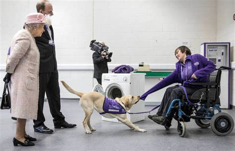 Footstep Royal Backpack braves the cold to meet pack of guide puppies royal news express co uk