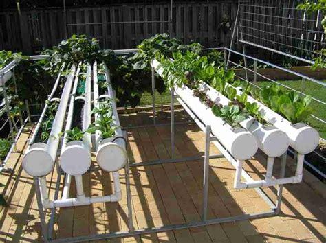 backyard hydroponics hydroponic garden
