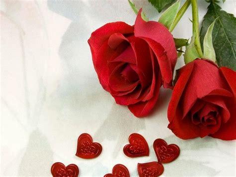 gambar bunga mawar indah koleksi gambar dan foto menarik 20 gambar foto bunga mawar merah ayeey com