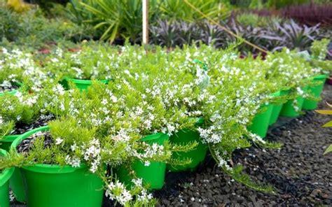 vasi on line vasi on line vasi da giardino vaso fiori