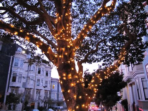 Useful Links Friends Of The Urban Forest Stringing Lights In Trees