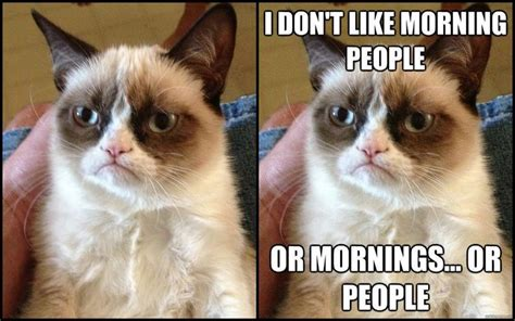Grumpy Cat Meme Creator - 25 best ideas about grumpy cat meme generator on