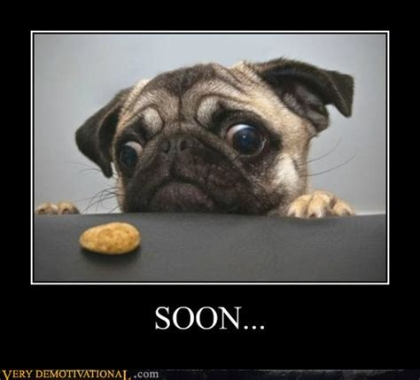 can pugs eat cheese my update away march 2nd ars technica openforum