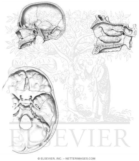 anatomy coloring pages skull free coloring pages of anatomy skull