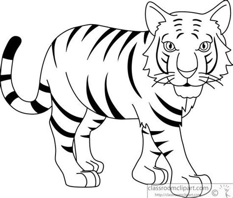 stripeless tiger coloring page stripped bengal tiger black white outline 914 jpg clip