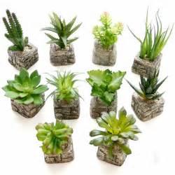 aliexpress buy small potted bonsai mini succulent plants succulents set flower vase