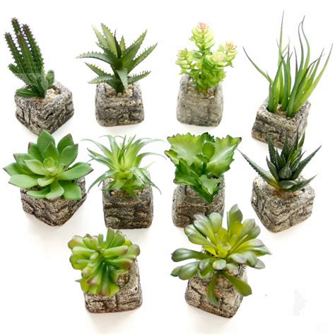 mini potted plants aliexpress com buy small potted bonsai mini succulent