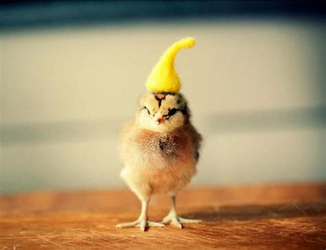 Cutest baby chicks in hats by julie persons design swan
