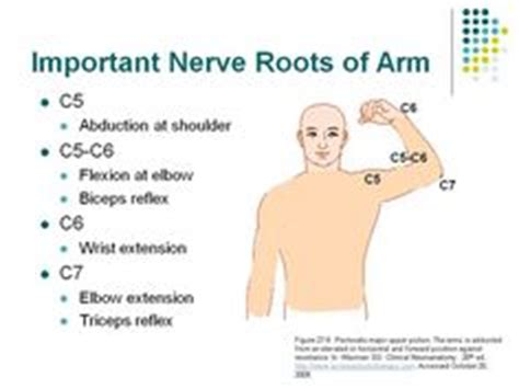 Peripheral Nerve Distribution Of Lower Extremity File