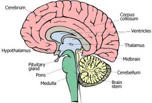 what the different parts of the brain do ehow uk