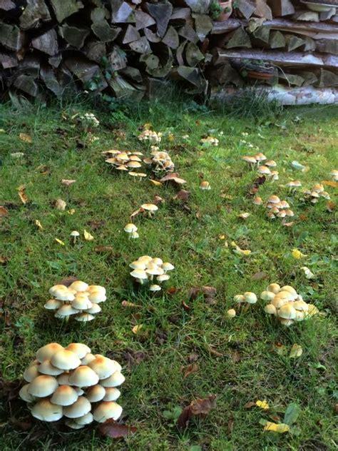 Bei Uns Wachsen Pilze Im Garten by Waldspaziergang H 228 Kelfieber