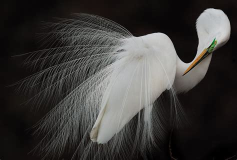 The Best Photographer by The 2015 Audubon Photography Awards Winners Audubon